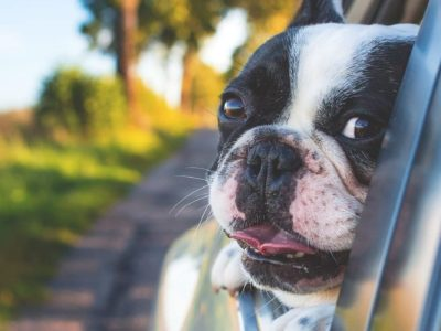 Tips for Travelling with Dogs