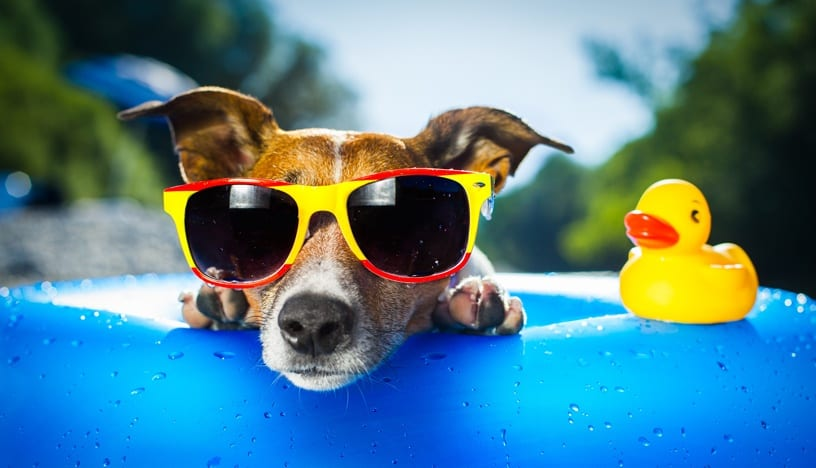 summer-pet-safety